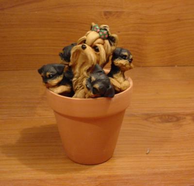 Original Yorkie Yorkshire Terrier Spring Dog Sculpture Claydogz Mandyo OOAK
